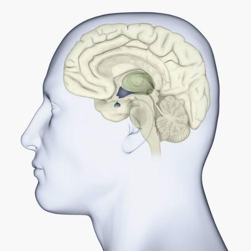 Аденома гипофиза головного мозга: симптомы и признаки, лечение и удаление