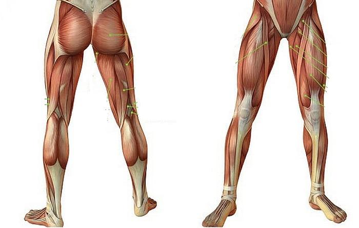 Боль в колене и задней поверхности бедра
