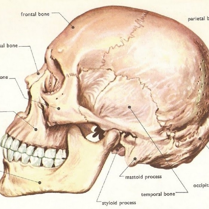 Болит голова в области глазниц и переносицы