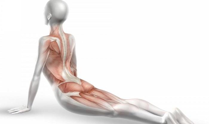 От чего может болеть двуглавая мышца бедра